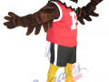 Penfield-High-School---Eagle